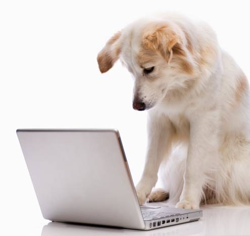 dog writing Archives - http://www.exquisitewriting.com